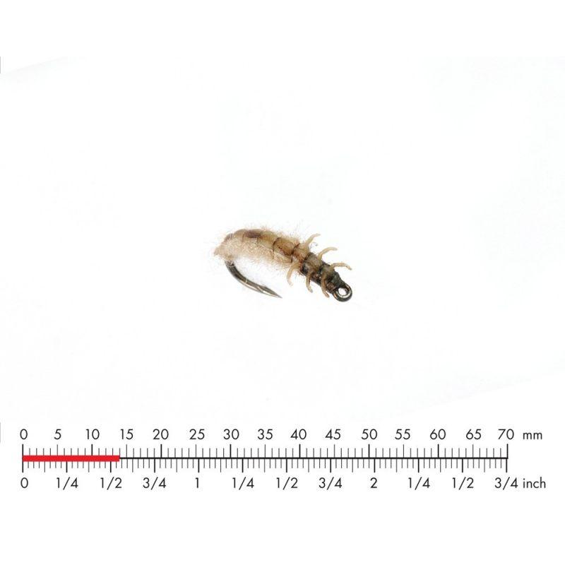Caddis Larva 4