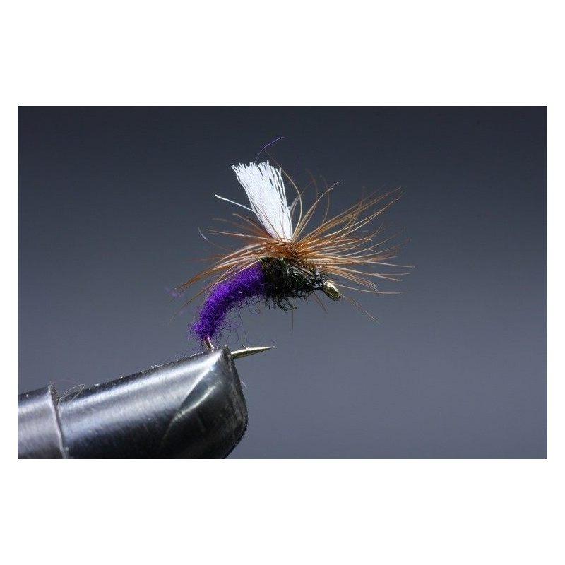 Klinkhamer Purple Koko 14