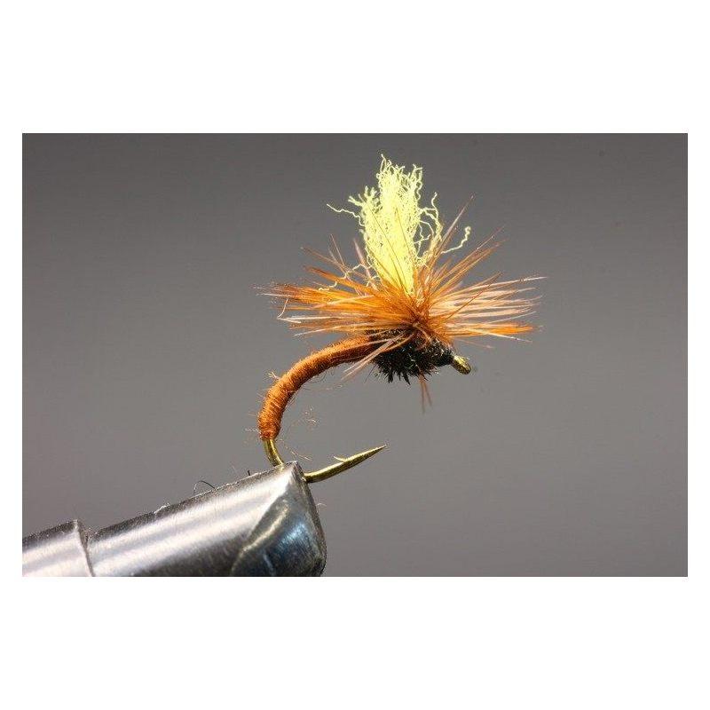 Klinkhamer Brown Yellow top Koko 12