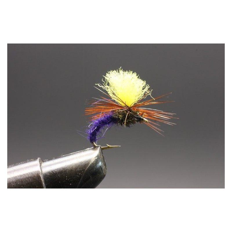 Klinkhamer Purple yellow top Koko 12
