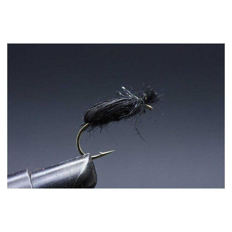 Black beetle Koko 8