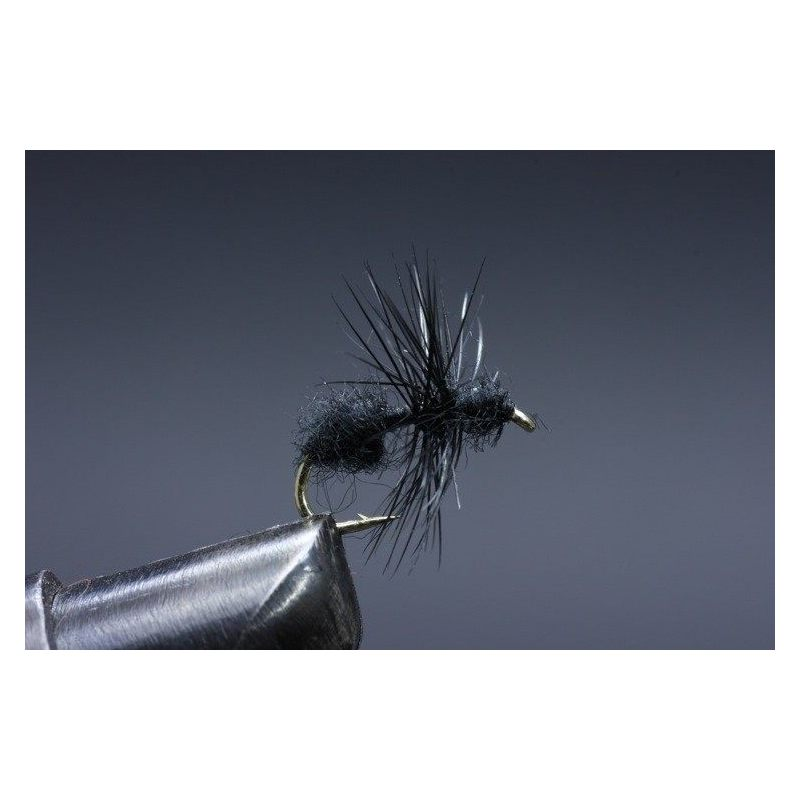 Black Ant Koko 14
